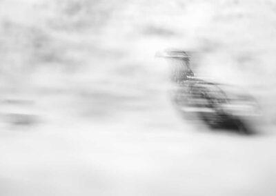 Austria, Österreich, Workshops, Fotoreisen, Fotokurse, Photography, Philipp Jakesch Photography, Fotografie lernen, besserebilder, Fotowissen, Adler, Tiere, Wildlife, Wildtiere