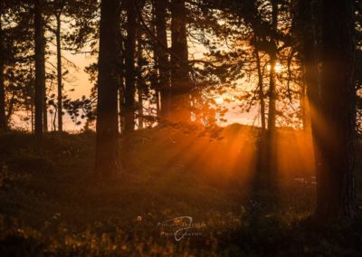 Finnland, Finland, Lappland, Hoher Norden, Nordeuropa, 69 degrees, Europe, Travel, Adventure, Adventures, Nikon, NRS, Sponsors, The Heat Company, Nature, Outdoor