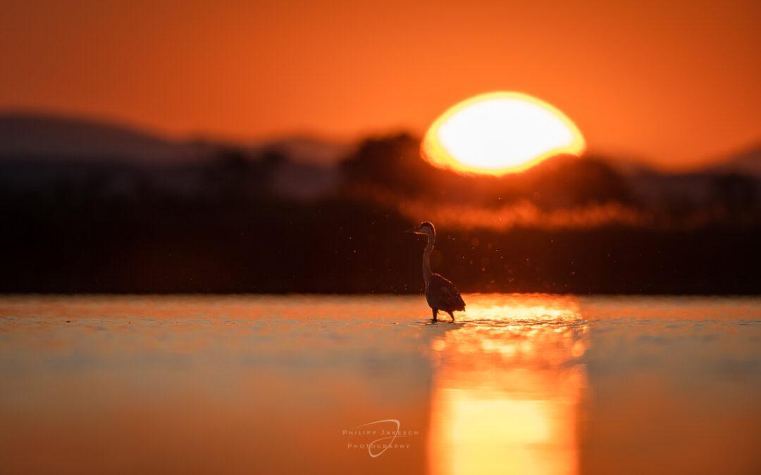 Vögel Fotografieren im Seewinkel